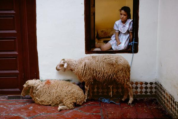 Bruno Barbey, Casablanca. Buying sheep during Ait Kebir festivities. 1993.