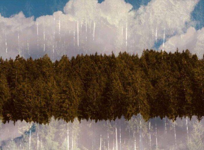 Maurizio Galimberti, Forest Frame. La foresta tra sogno e realtà