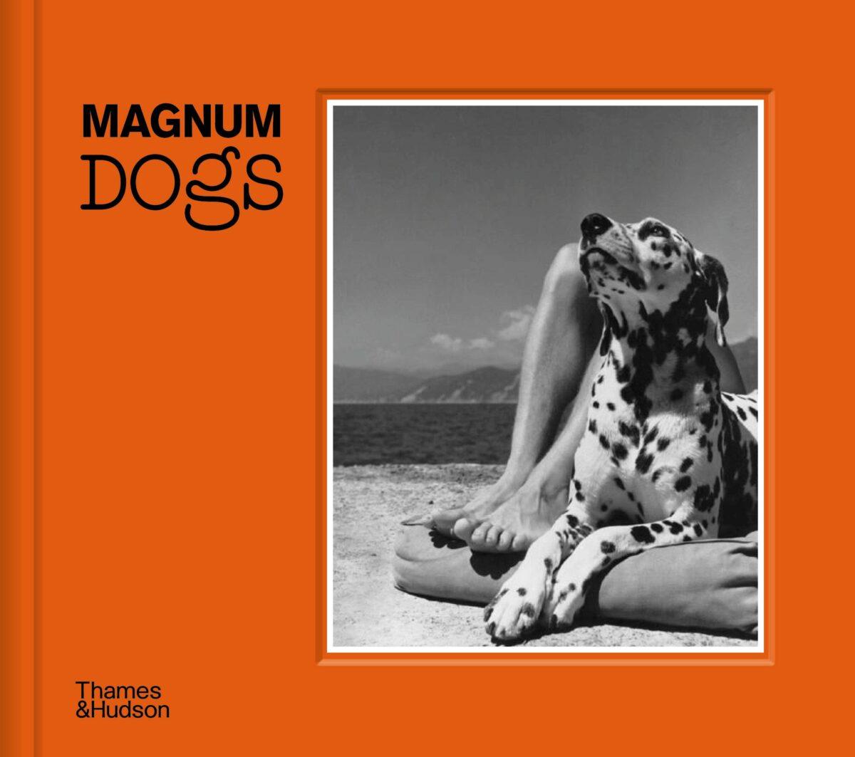 magnum dogs